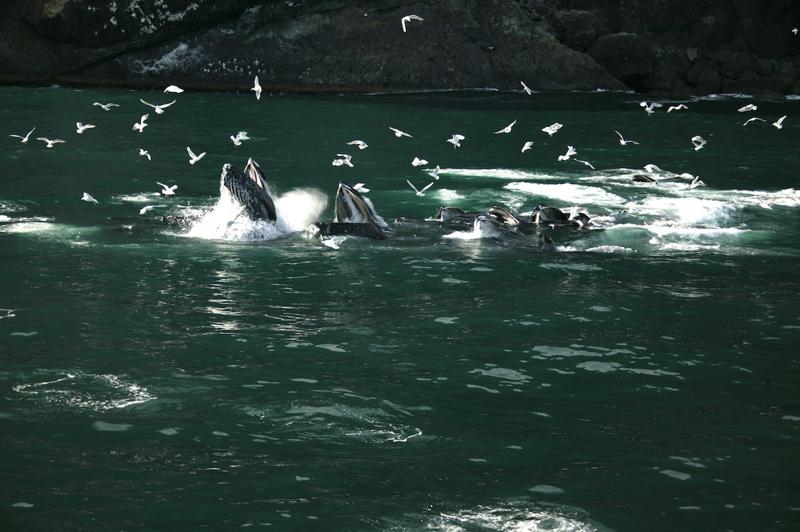 Seward alaska fishing halibut salmon fishing charters for Seward alaska fishing