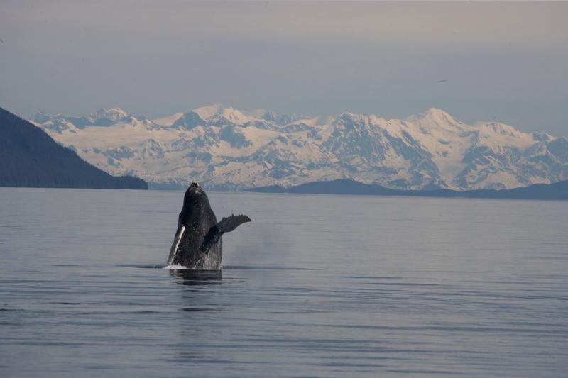 Full day fishing charters from seward alaska crackerjack for Seward alaska fishing reports
