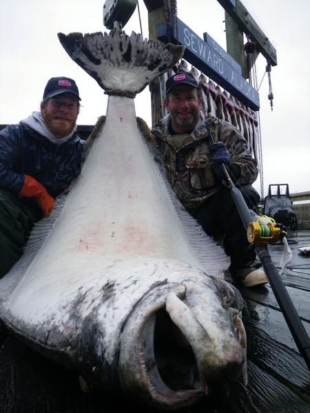 crackerjack alaska sportfishing fleet seward halibut