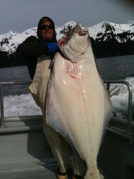Seward alaska fishing halibut salmon fishing charters for Seward halibut fishing