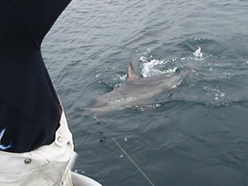 Halibut fishing in seward alaska for Seward alaska fishing reports