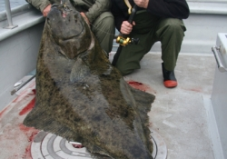 Halibut Fishing Photos