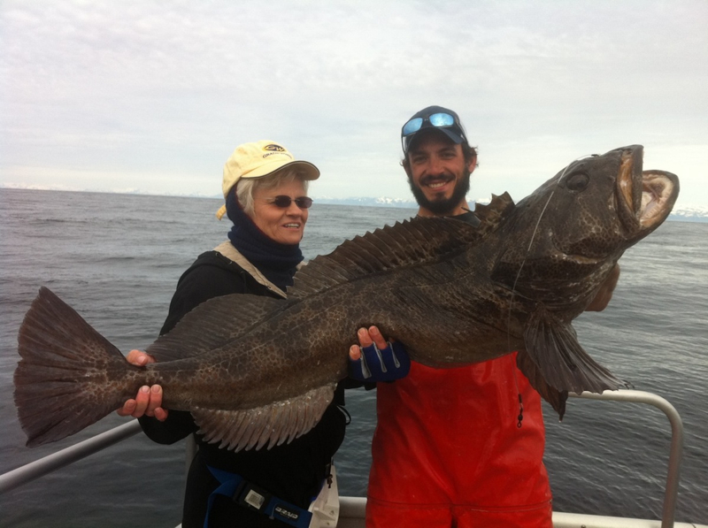 Giant lingcod images galleries with a for Fish in alaska