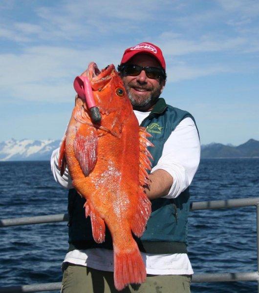 Lingcod fishing information seward alaska for Seward alaska fishing reports